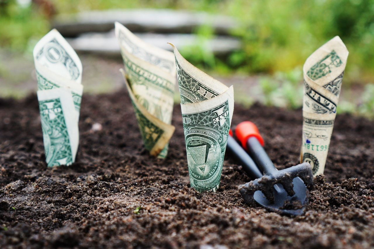 How much it will cost to grow your own cannabis