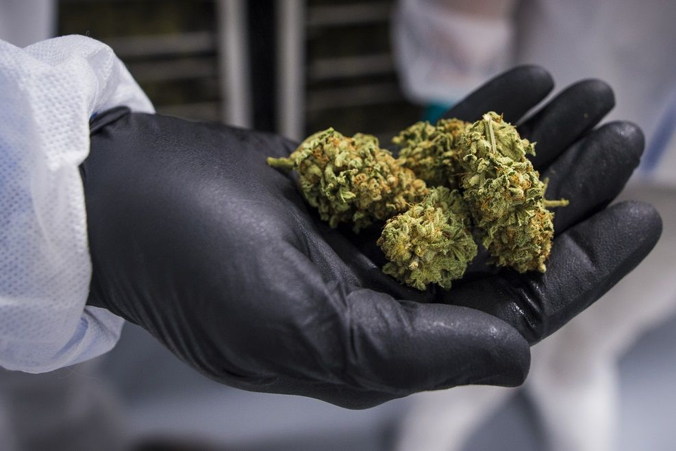 Ontario pharmacists now required to complete course in cannabis education