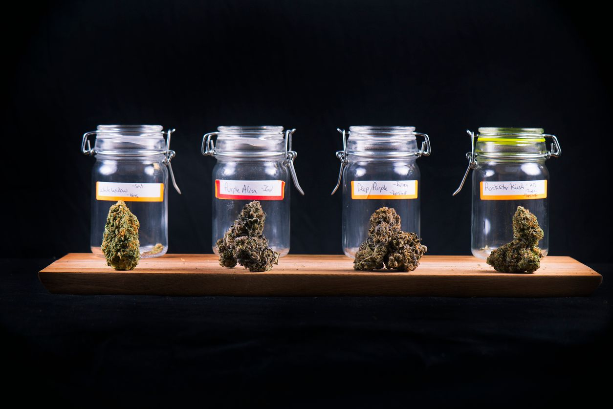 Some of the most potent smelling weed strains in the world