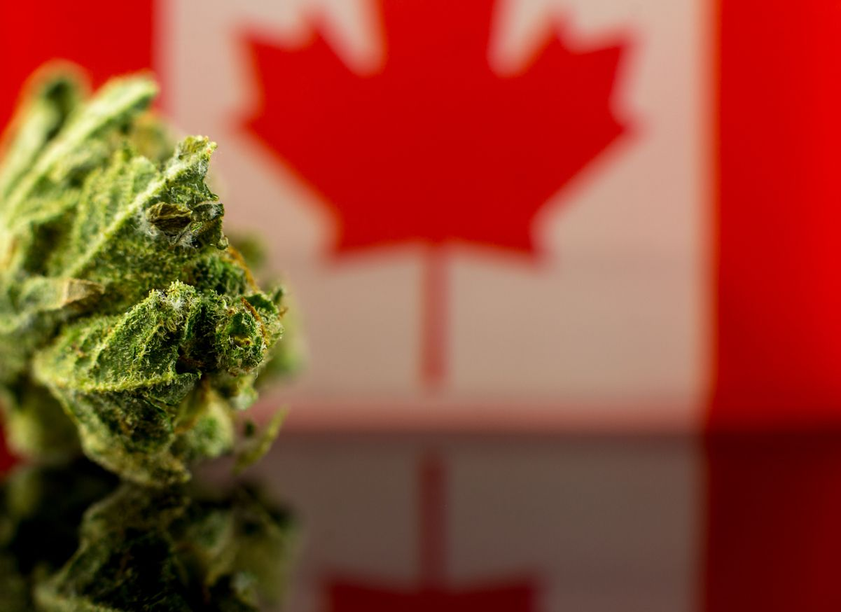 How is the black market for cannabis in Canada after nearly eight months