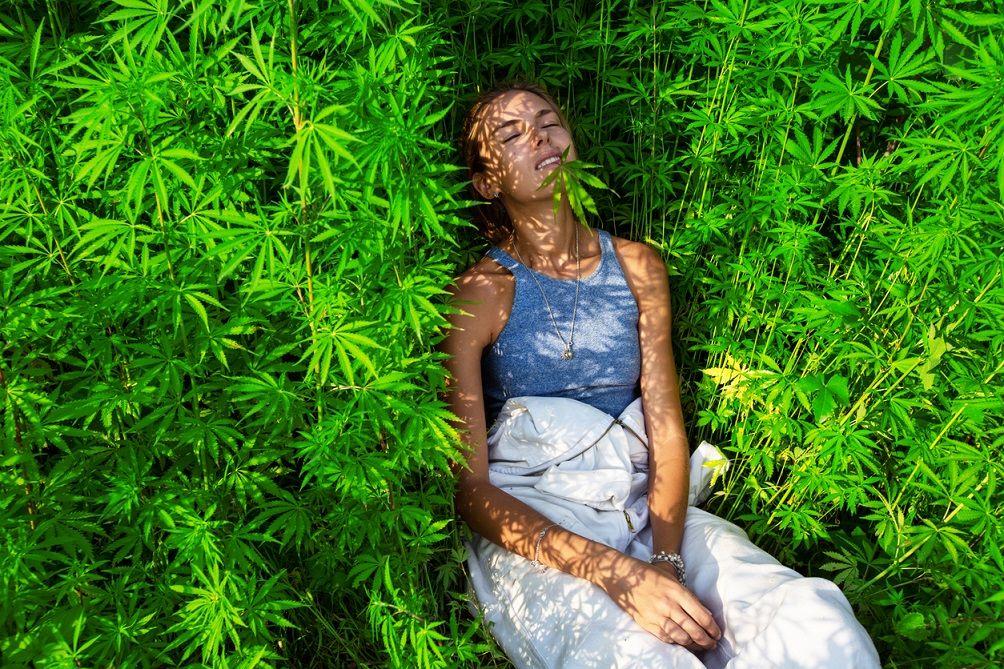 Конопля без эффектами день употребления марихуаны