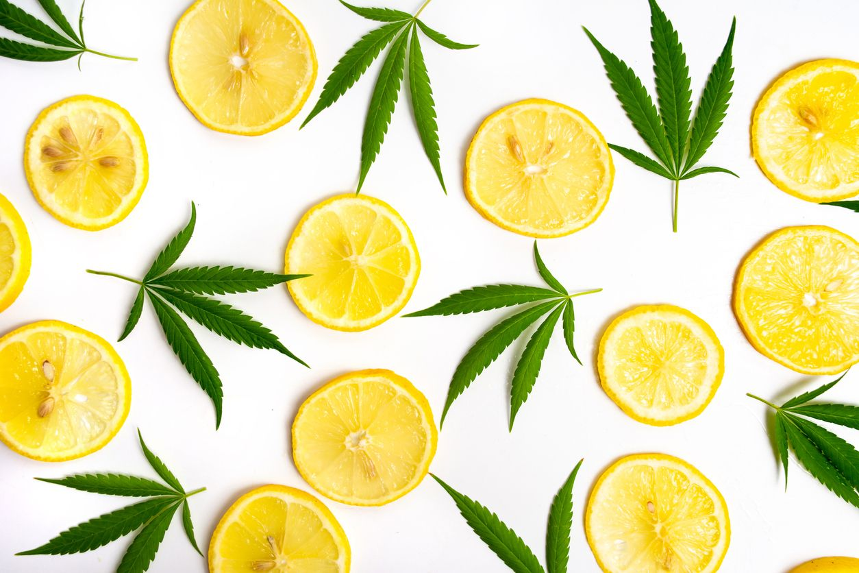 10 High Limonene terpene cannabis strains of 2019