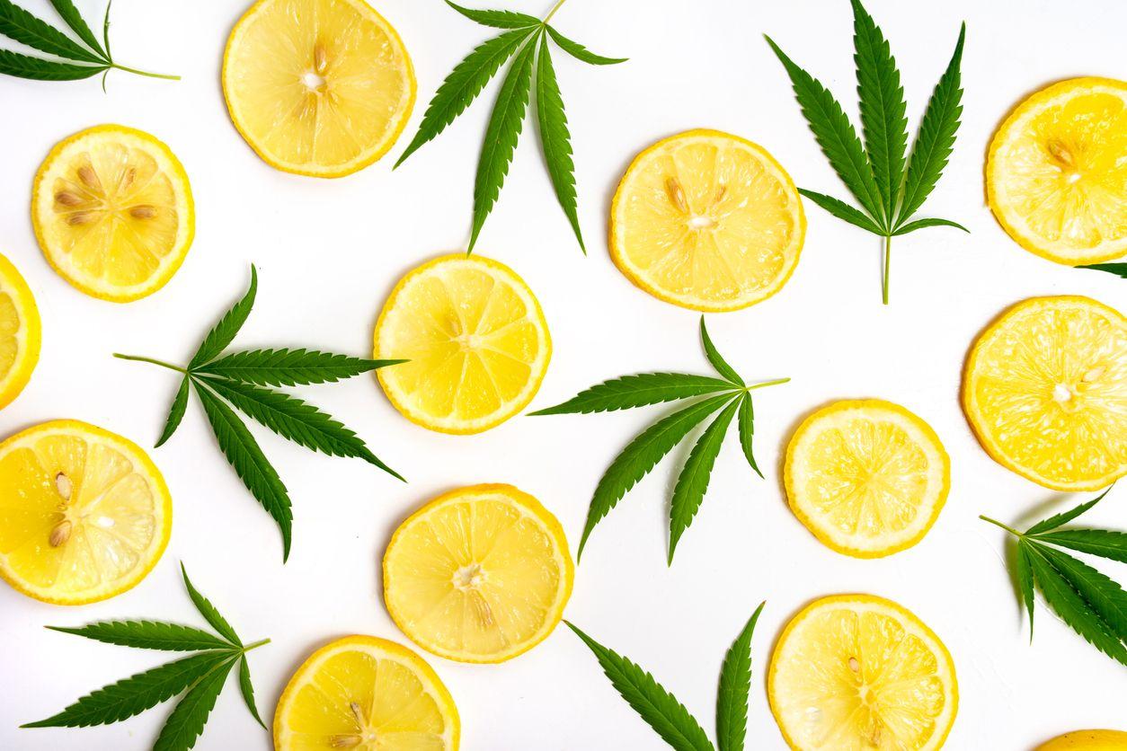 10 High Limonene terpene cannabis strains of 2019