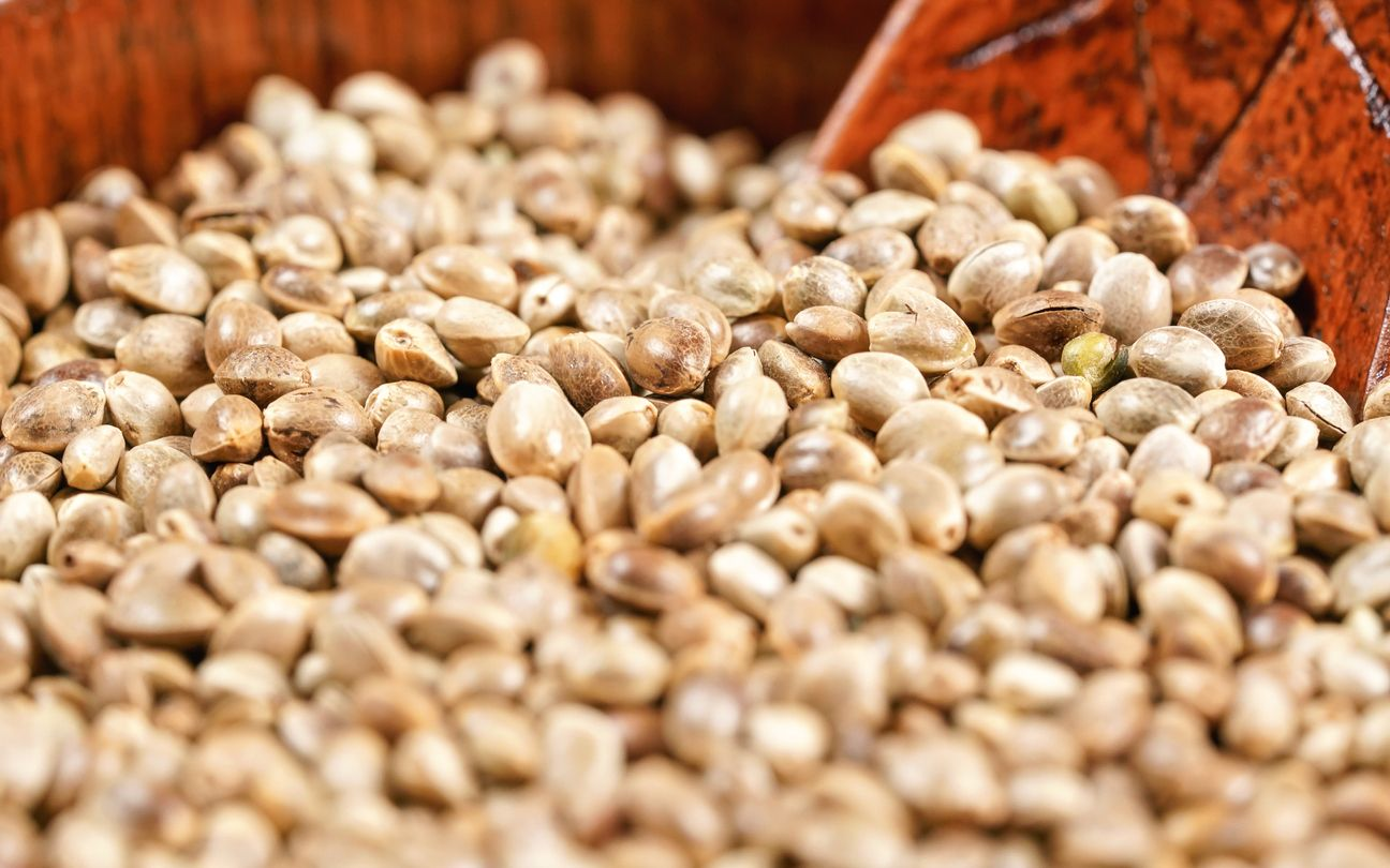 10 Things to look for when youre on the market for cannabis seeds