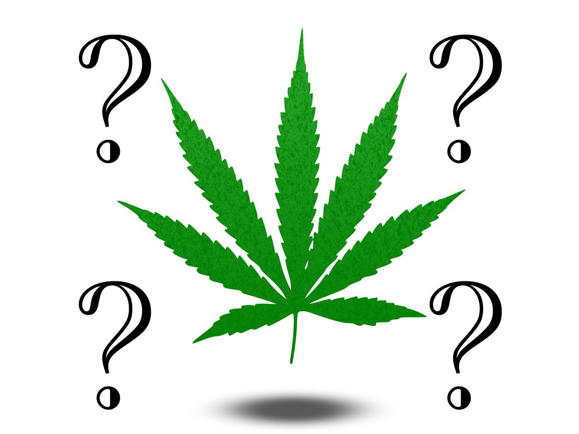 15 Fun cannabis trivia questions and answers