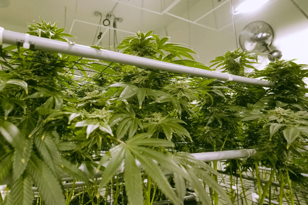 5 different ways to add automation to your cannabis grow room