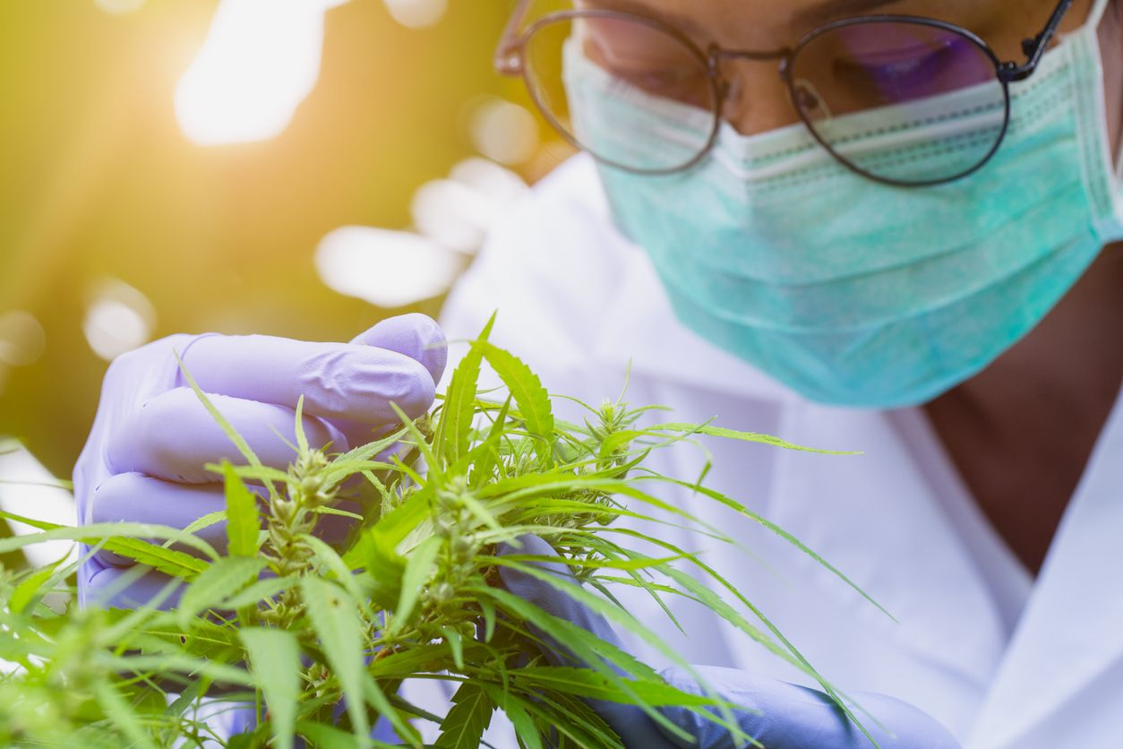 5 Dream cannabis jobs that actually exist