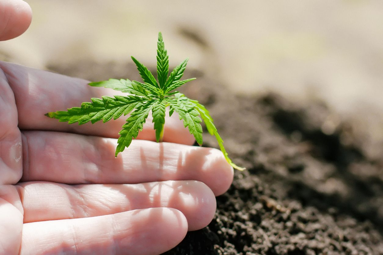 5 Great cannabis books to read in 2021 on cultivation