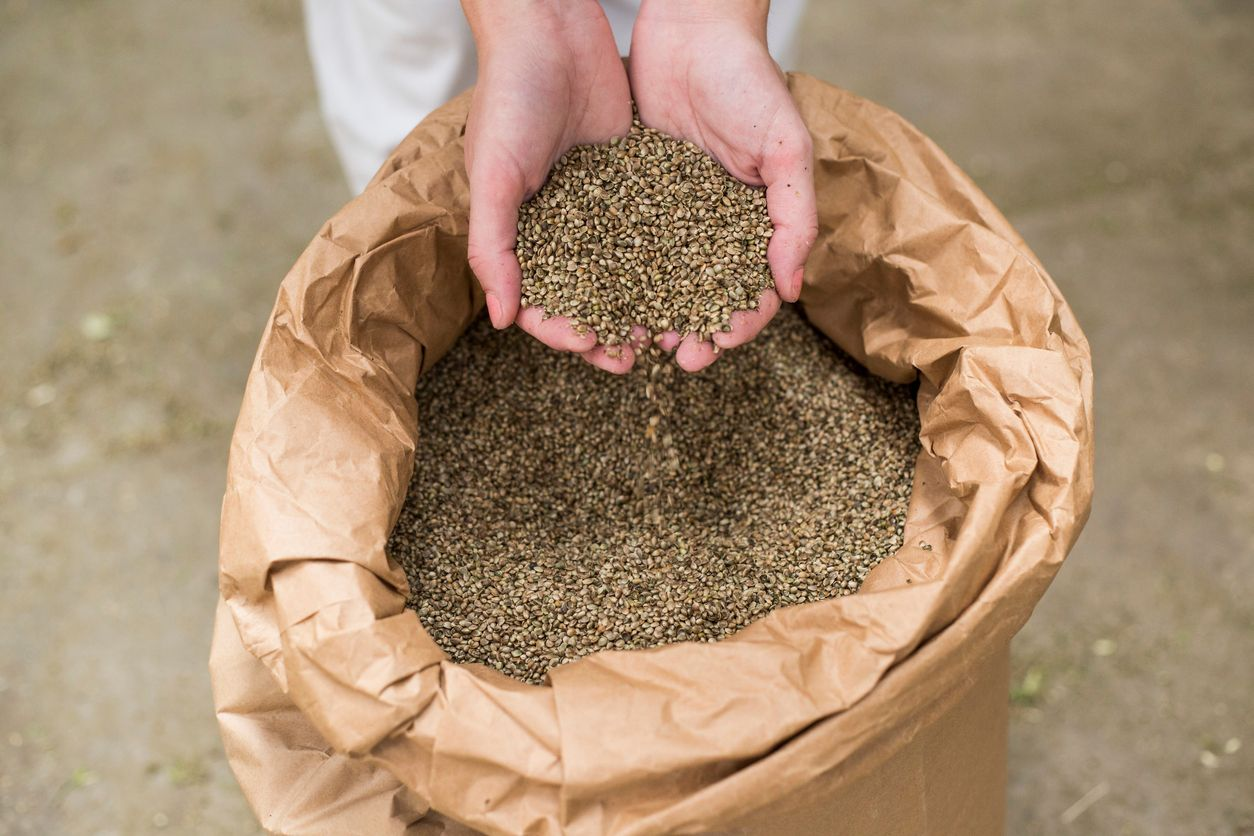 5 Health benefits of eating hemp seeds