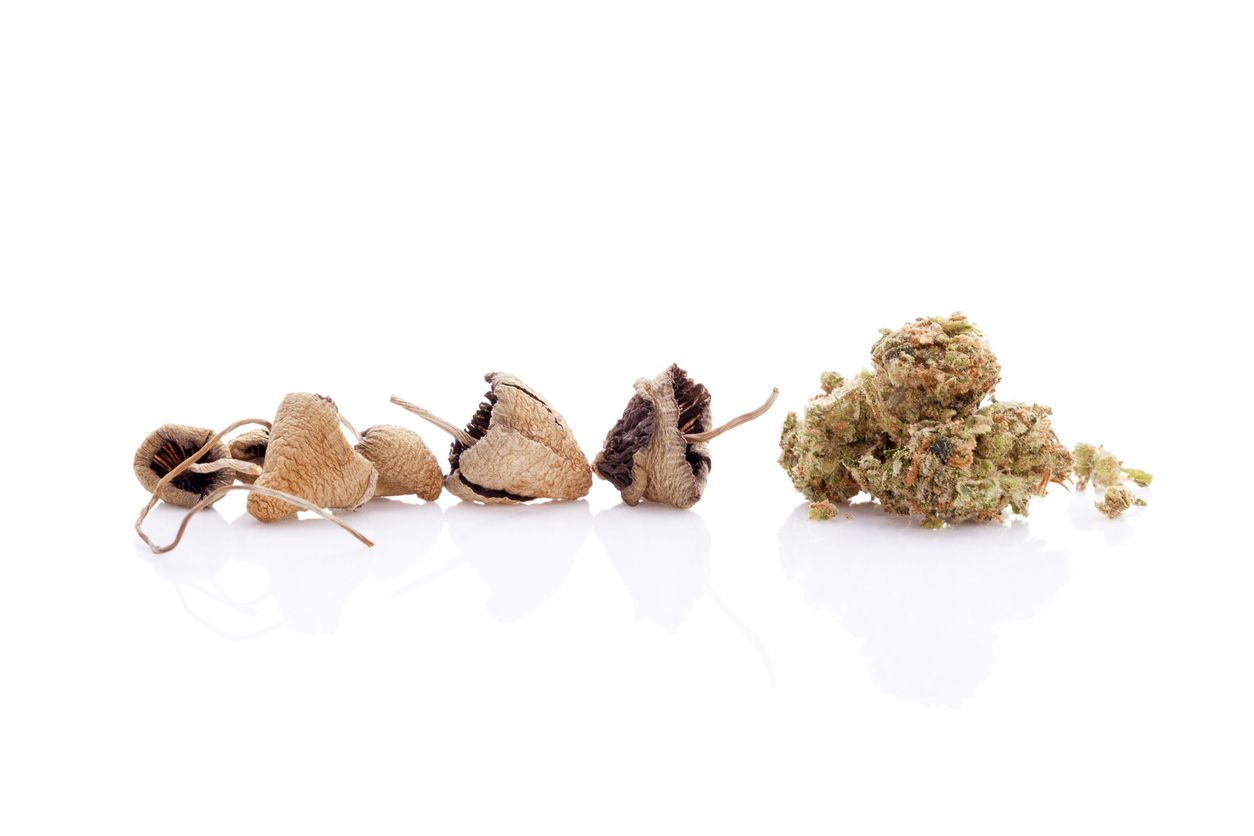 5 Reasons why big cannabis wont have to compete with psilocybin