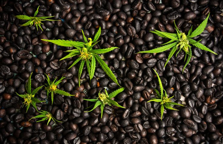 A look at the illegal weed coffee trade in Indonesia