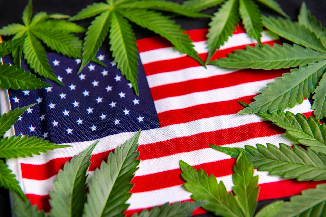 American consumers bought 67 more cannabis in 2020