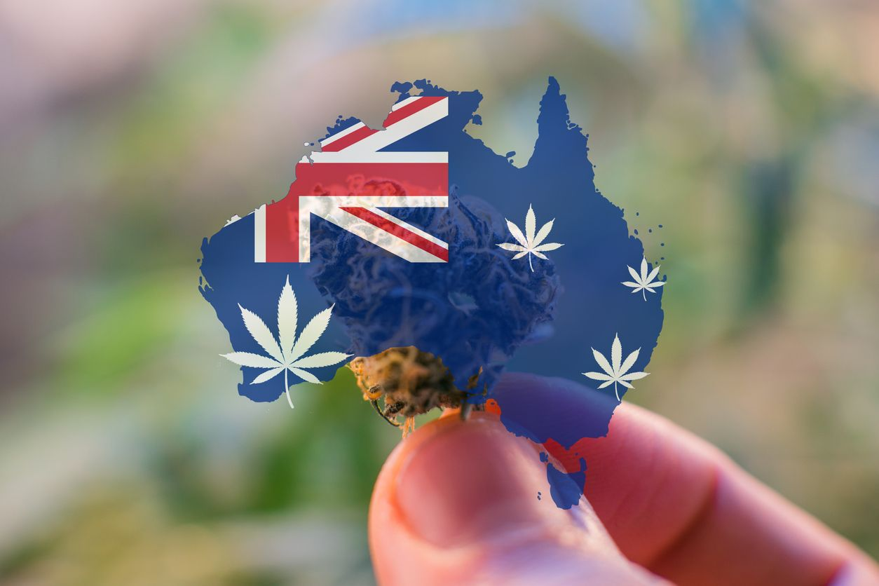 Australians toked more in 2020 than ever before