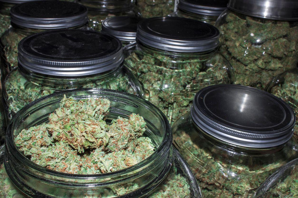 Canada has over 1 billion grams of cannabis sitting idle