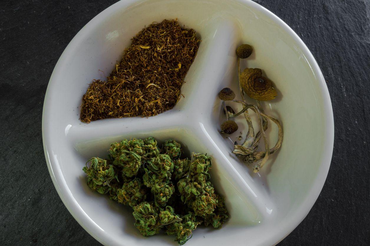 Cannabis versus magic mushrooms