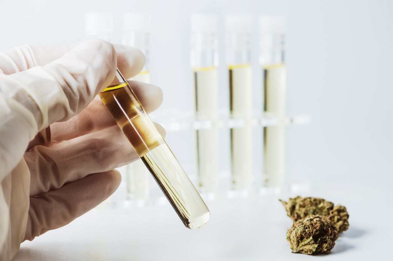 Cannalogue hopes to conduct clinical trials on COVID19 symptoms