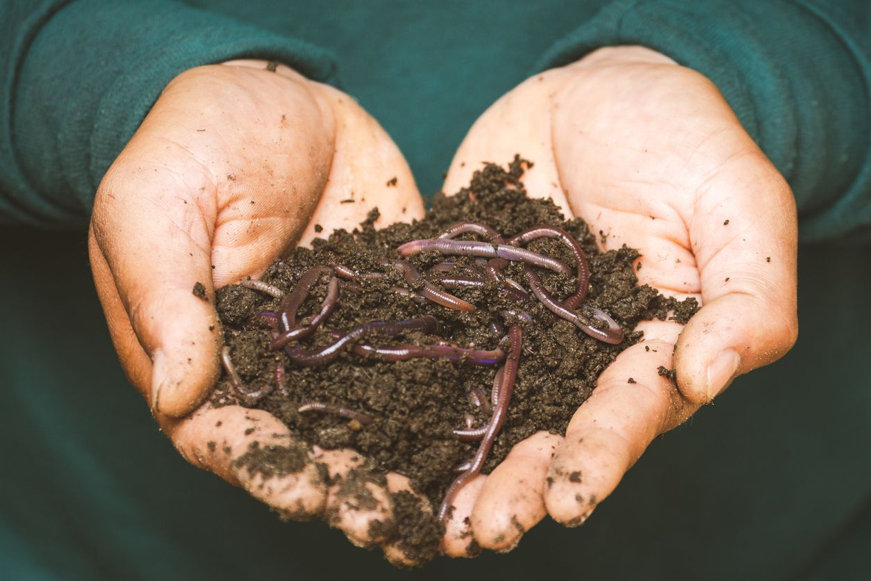 CBD seems to extend the life of worms