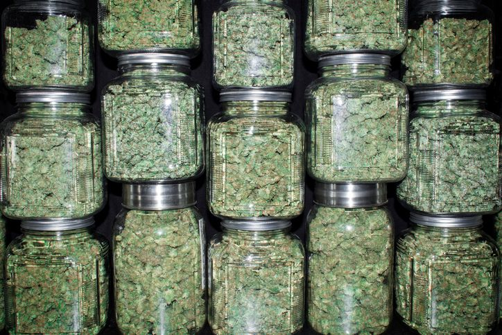 How to Dry Cure and Store Weed Like A Pro