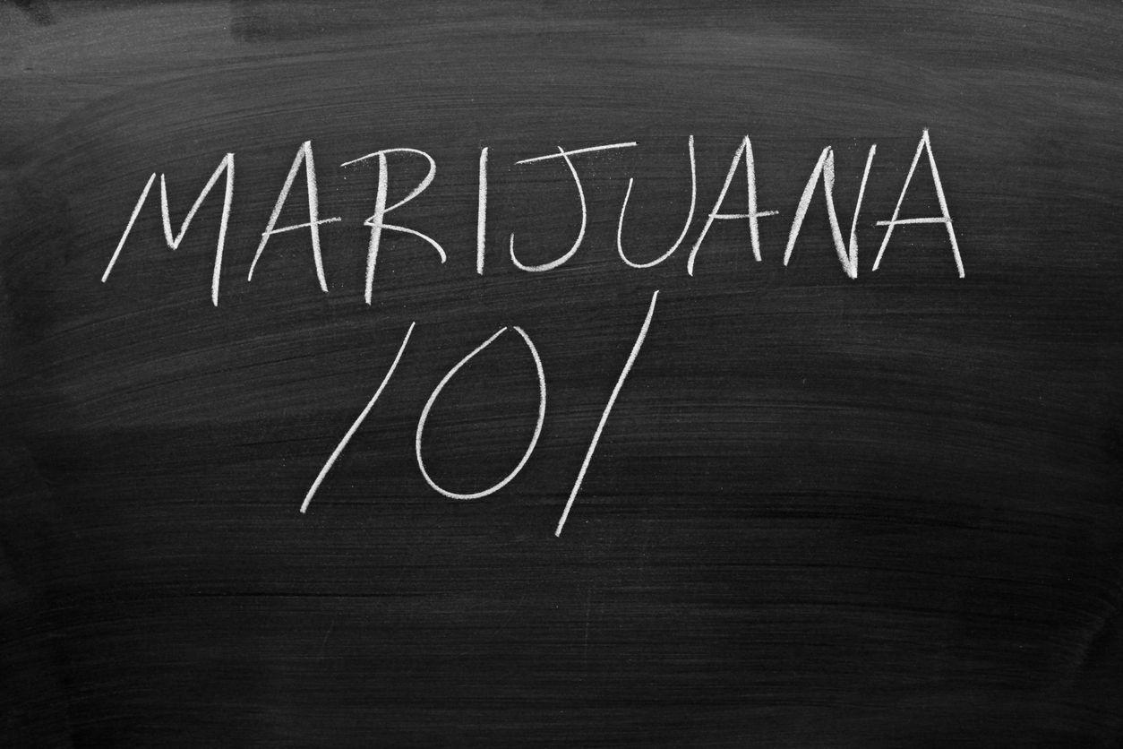 Is a cannabis education worth getting