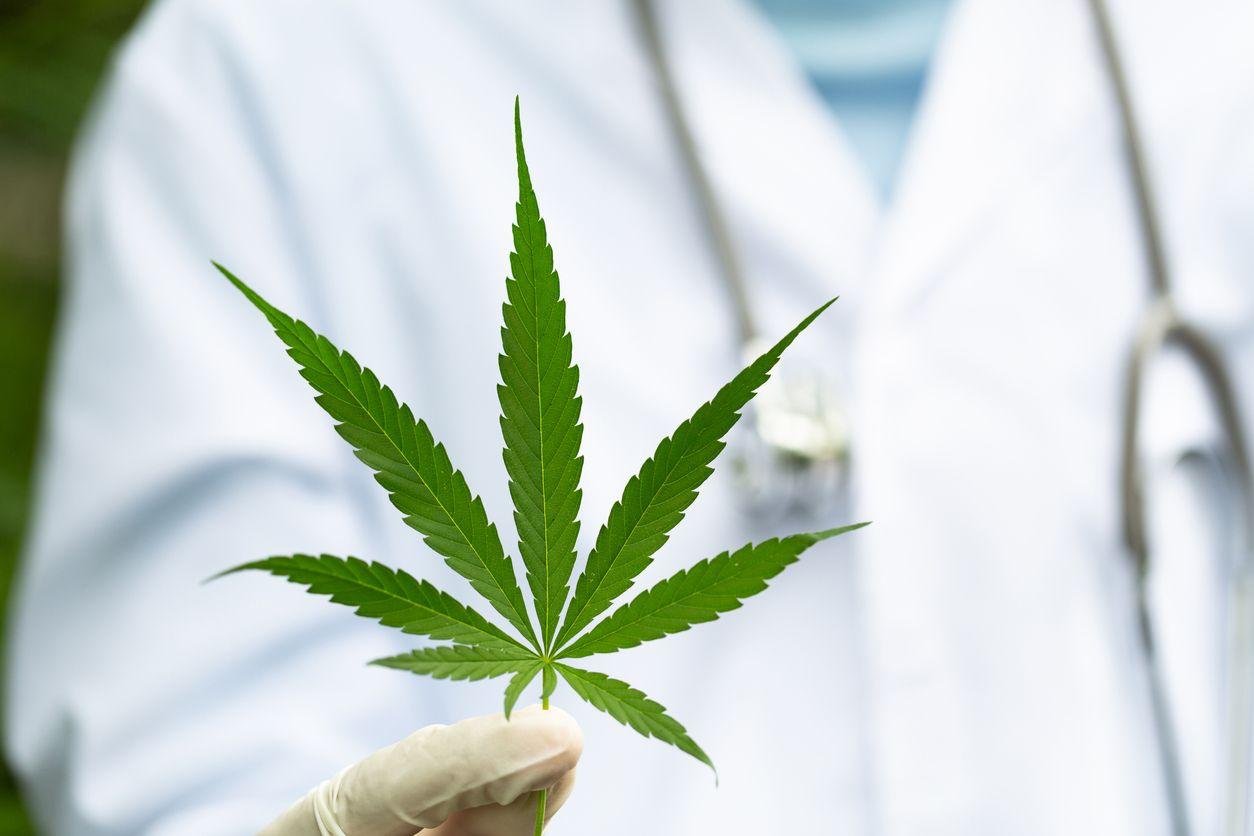Is Italys medicinal cannabis market in jeopardy