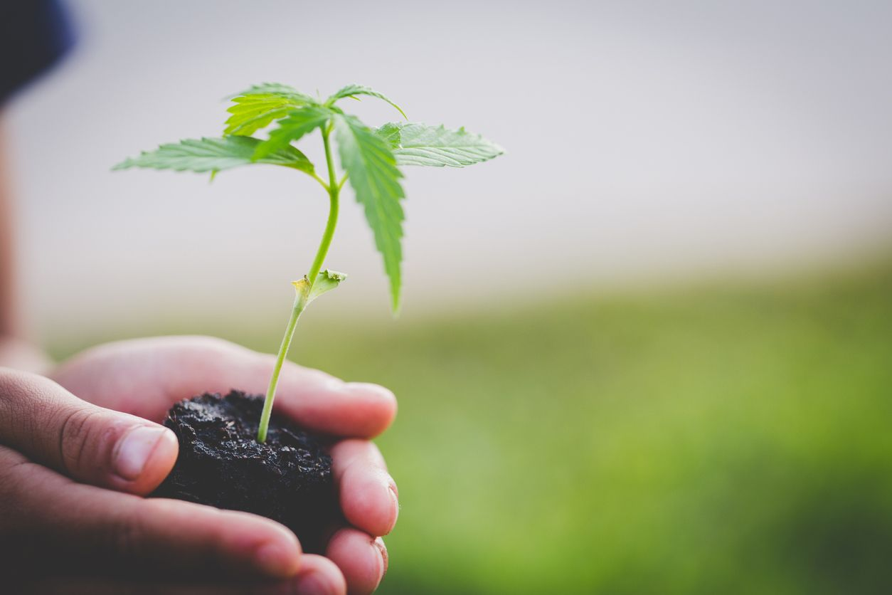 5 reasons why you might want to grow a hemp plant
