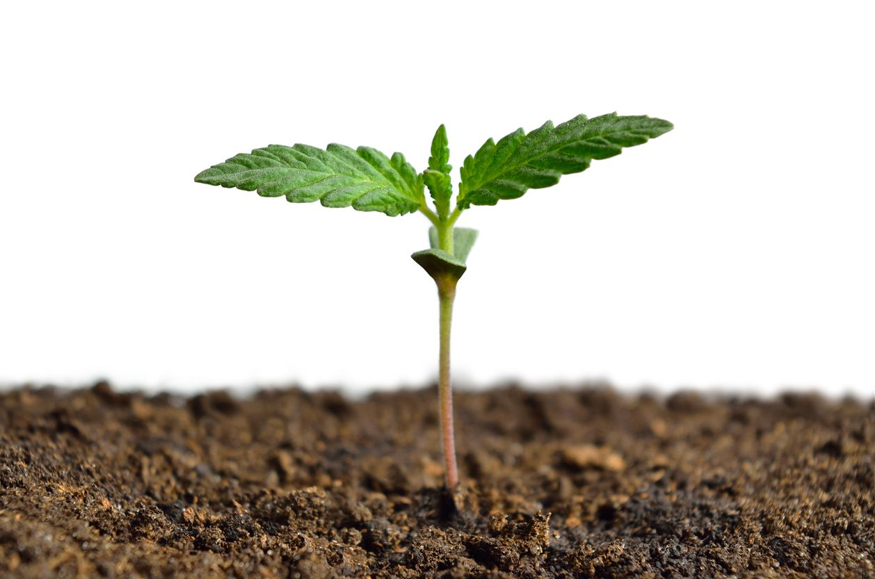 A Guide to Using Super Soil to Grow Super Weed