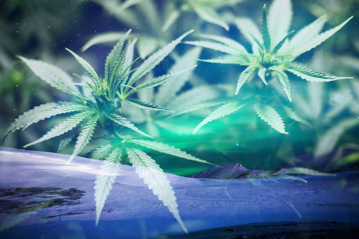 Aurora Cannabis Inc  A leader in the Canadian cannabis industry