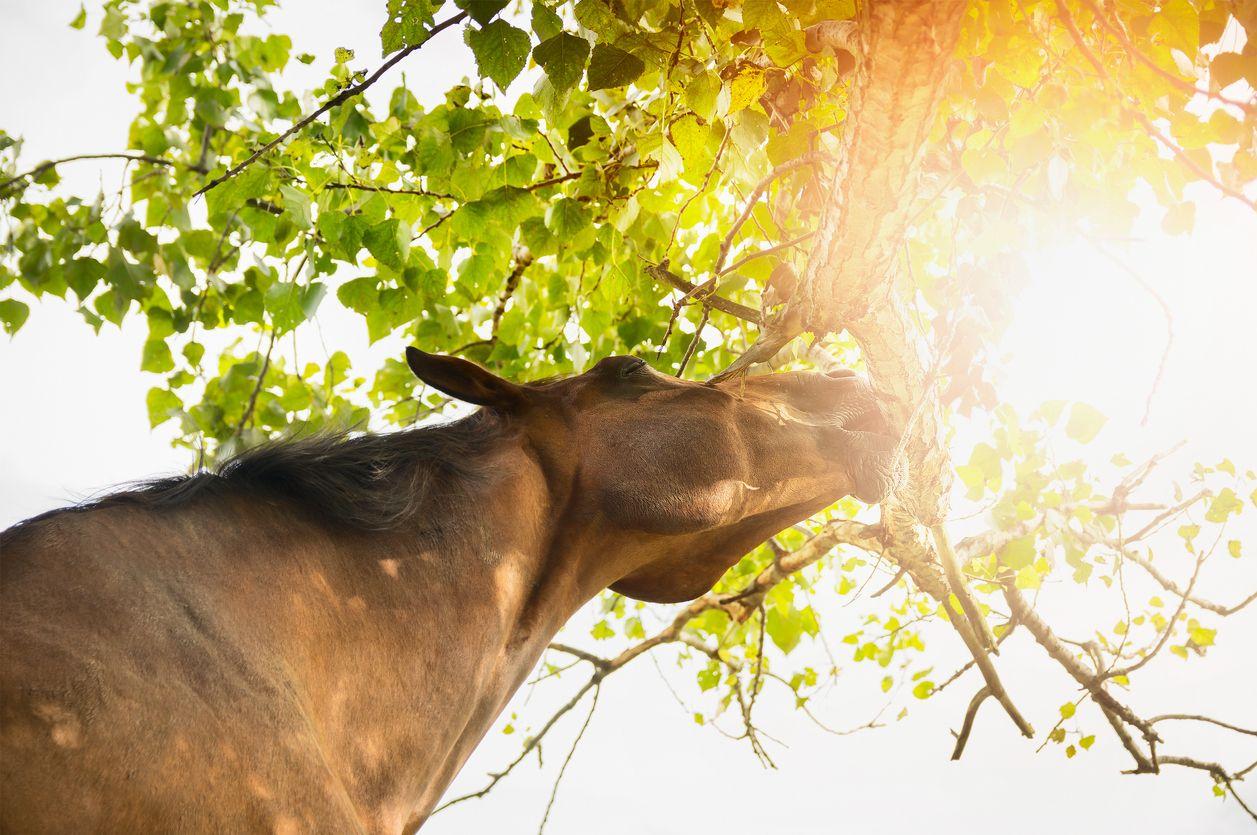 Using CBD oil to treat common symptoms in horses
