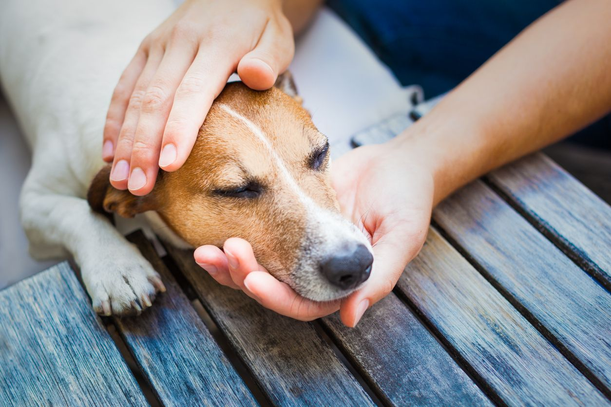 Vets report more incidents of accidental cannabis ingestion by pets