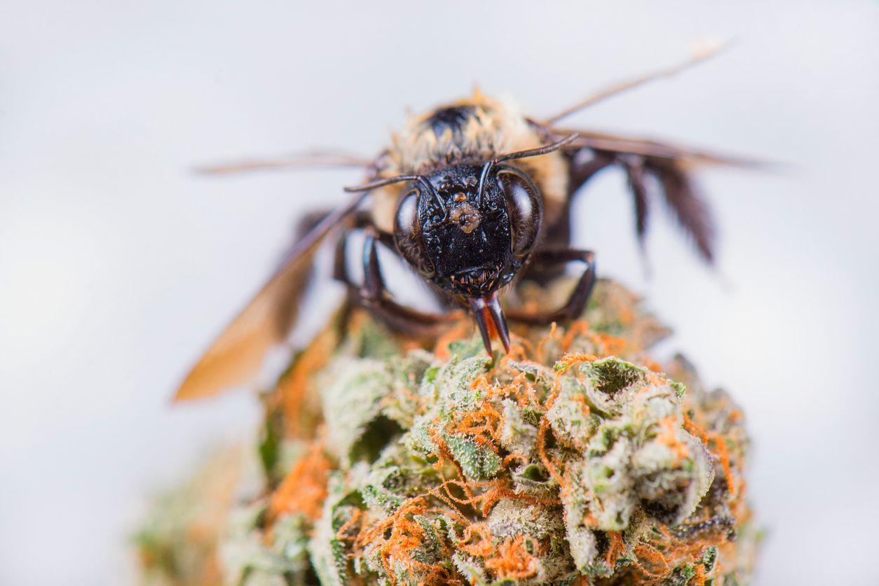How hemp farms are saving the bees