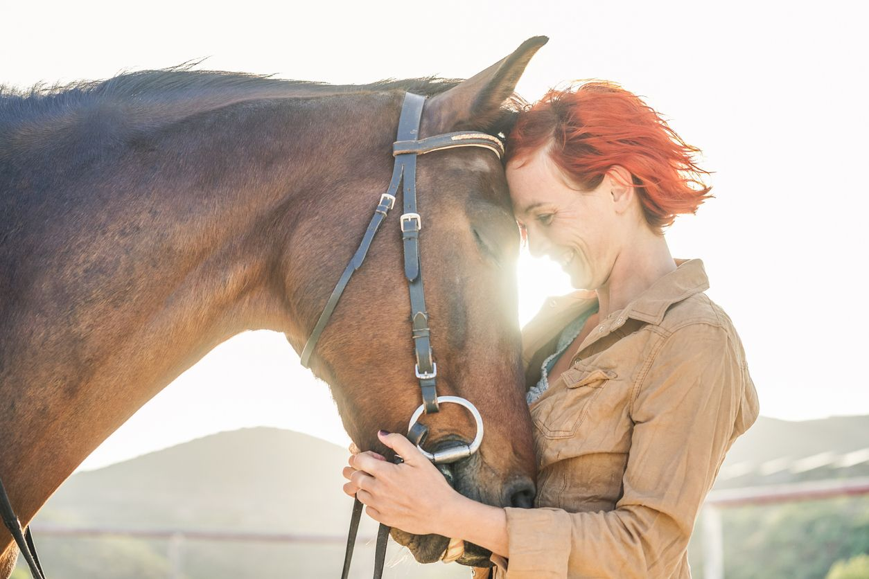 New study to prove the effectiveness of CBD for horses