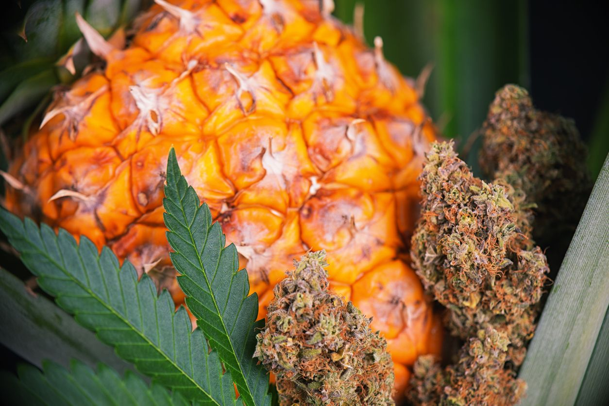 Pineapple weed strains you have to try at least once