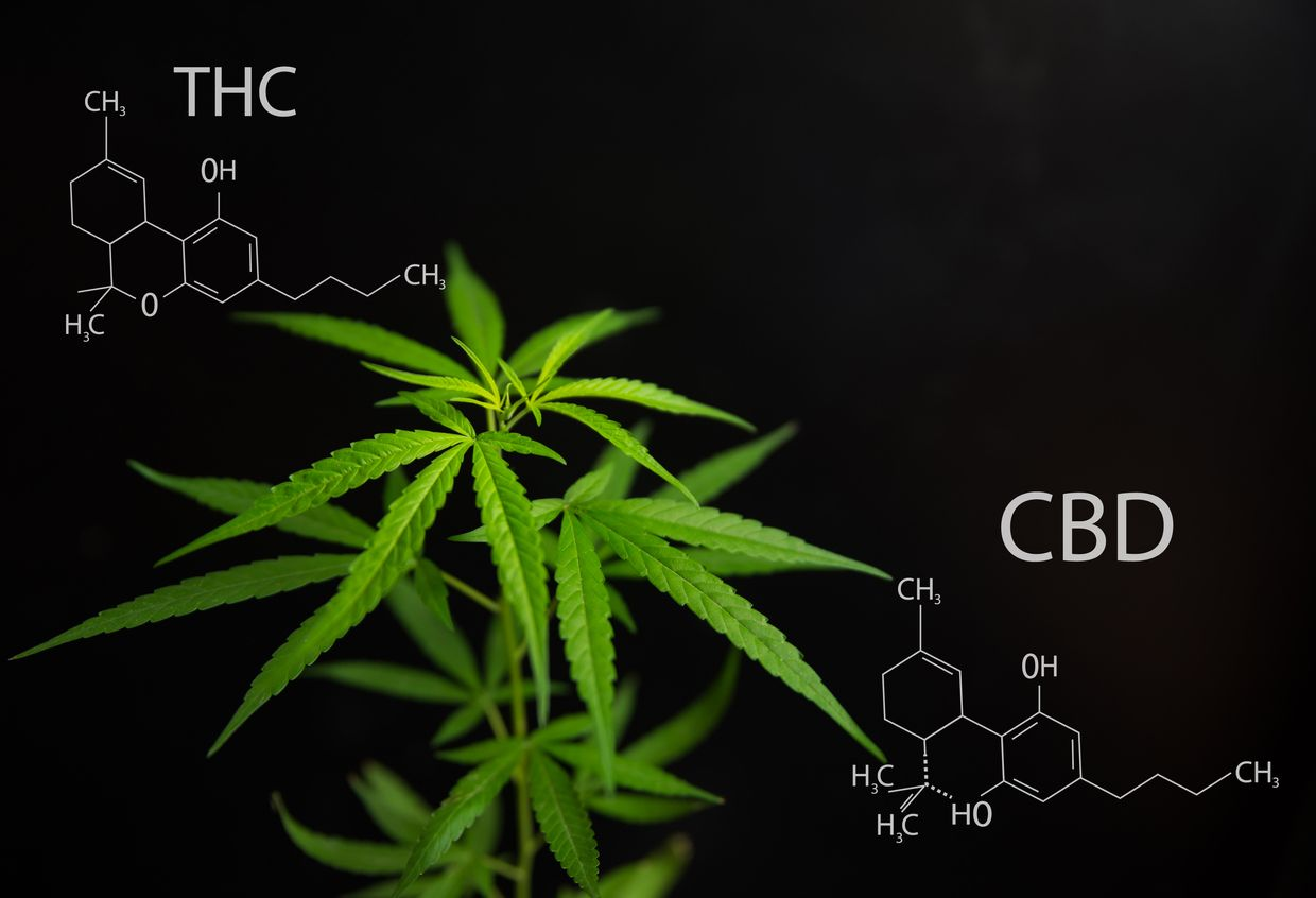 Predicting the effects of a strain using only THC and CBD