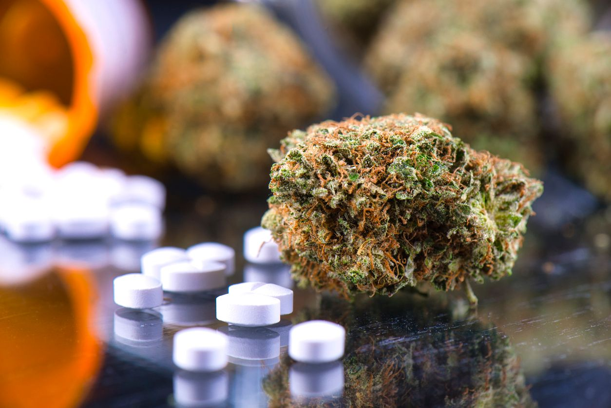 Study finds women are more likely to opt for pot over prescriptions