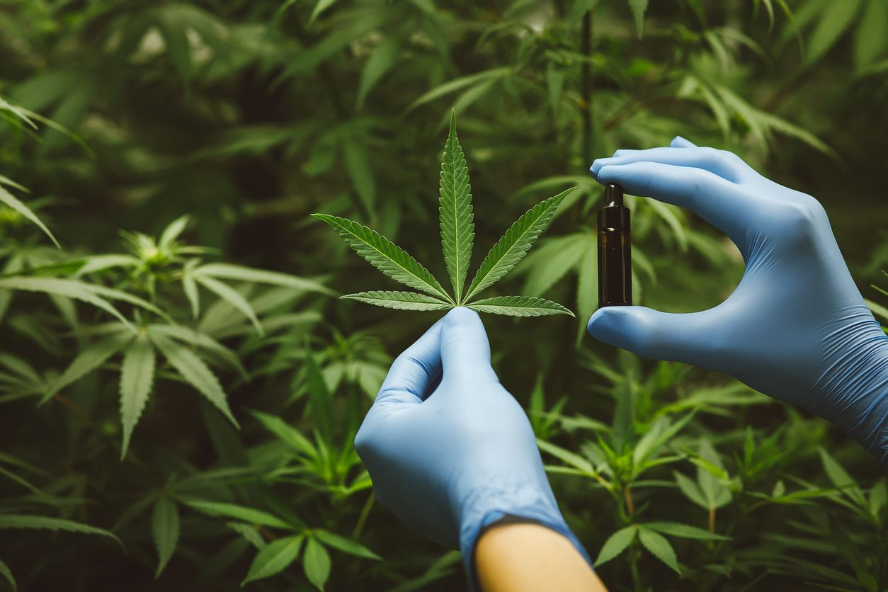 Study suggests cannabis may be an effective therapy for opioid abuse