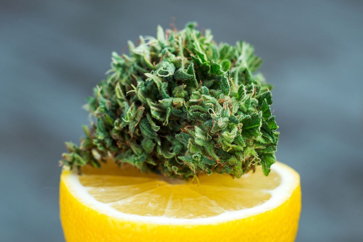 The most refreshing sour lemon weed strains