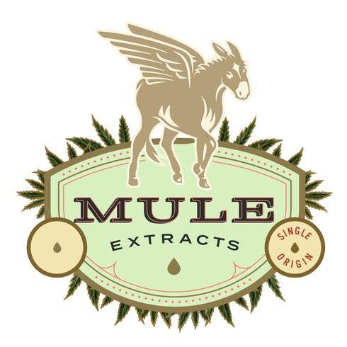 feature image (REC) Lemon Ginger, 1:1 Mule Kicker Cannabis Gummy