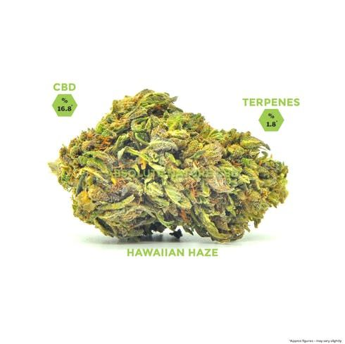 feature image 7g Pre-weight jar - Hawaiian Haze CBD