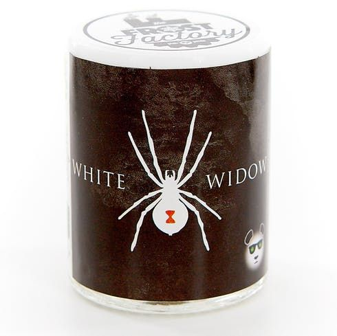 feature image White widow
