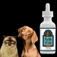 feature image Roots of Life  Pet Blend 1000mg CBD Tincture