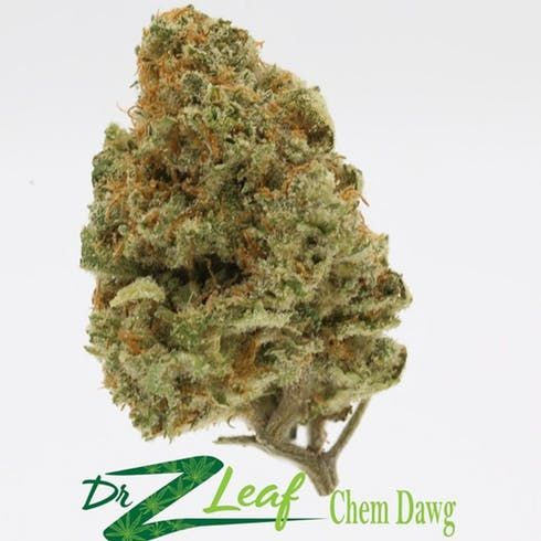 feature image Chem Dawg