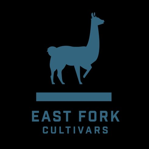 feature image ACDC (East Fork Cultivars)