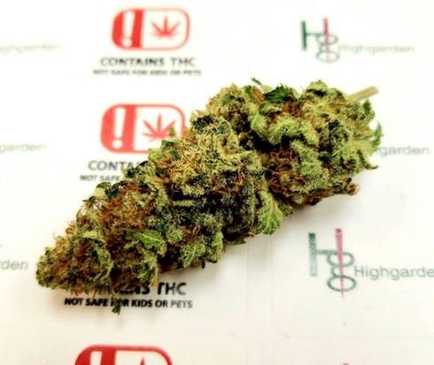 feature image Bruce Banner