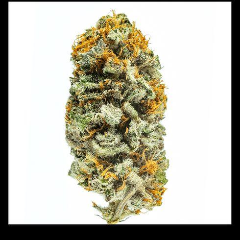 feature image Lotus Gold Cannabis Flower Lemon Skunk