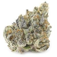 feature image A Golden State - Gelato - Silver Cloud