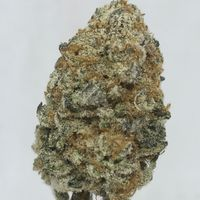 feature image Buddha Sister Skunk