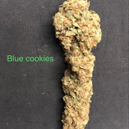 feature image Blue Cookies