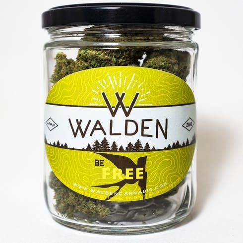 feature image  Pineapple by Walden Cannabis