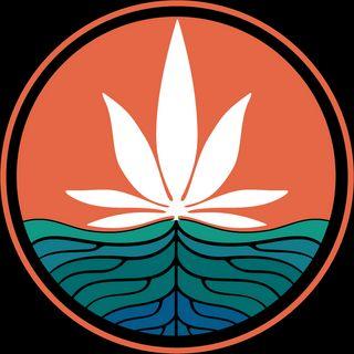 Cali Roots - Stillwater