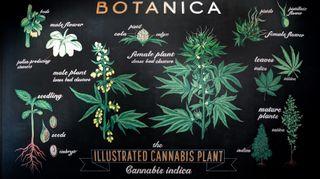 image feature Botanica
